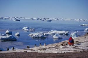 antartica-pinguinos-300-1024x682